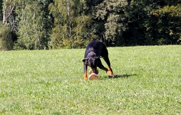 Trainingswoche im Bayrischen Wald 28.9.-4.10.2013